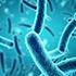 principales especies de bacterias
