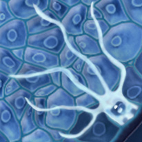 Melanocytes_GP