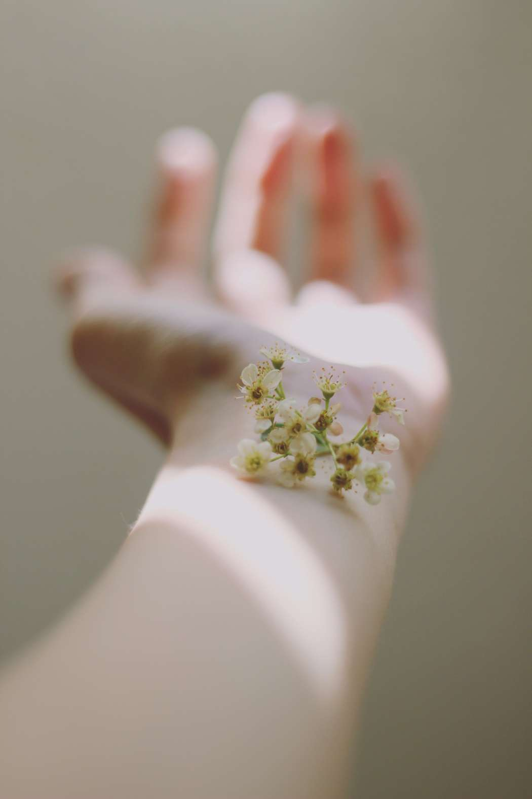 Plan de Belleza para la Postmenopausia