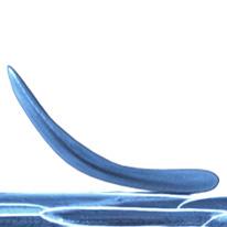 Corneocytes_GP